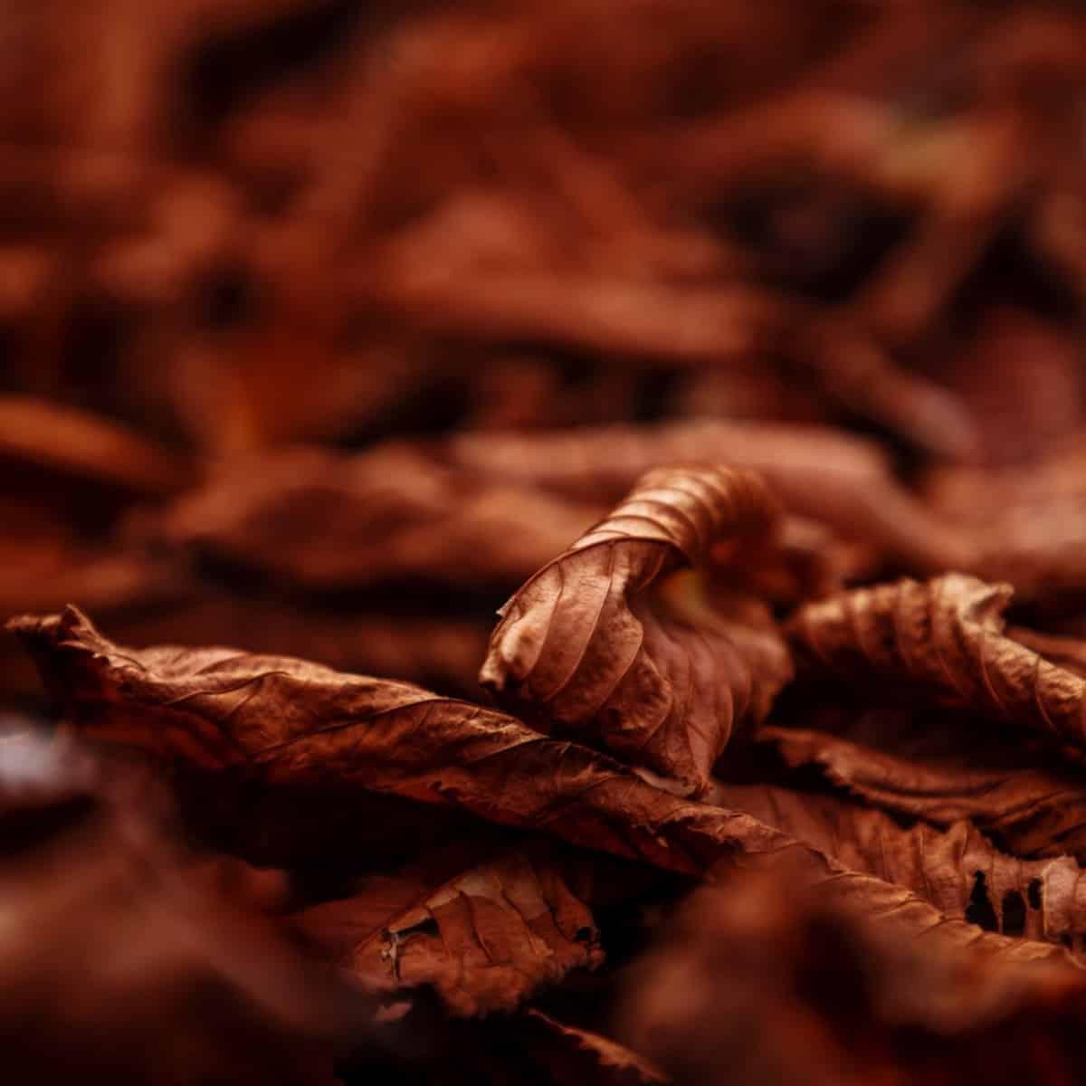 East Coast Tobacco Mt Baker Vapor