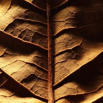 Oriental Tobacco Mt Baker Vapor