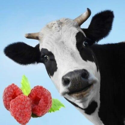 Raspberry Moo Mt Baker Vapor Flavor Concentrate