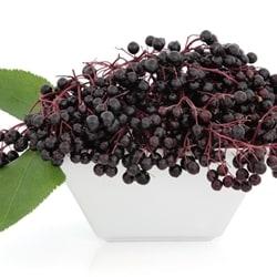 The Flavor Apprentice - Elderberry